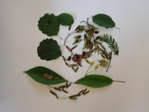 Leaves and seeds